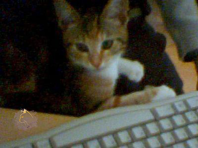 Mino - Tastatur
